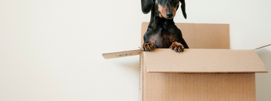 Moving home guide for designers